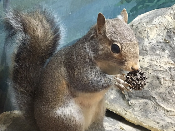 rv park squirrel